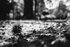Alien Nation? (mripp) Tags: art vintage retro old nature natur detail mono monochrom schwarzweiss leica m10 summicron 50mm critters alien fremd komisch