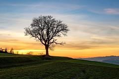 autumn sunset (Andreas.W.) Tags: mühlviertel upperaustria xf23 eveningsun eveninglight eveningmood sunset sunrays autumncolors autumnmood abendstimmung