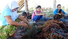 Lombok - village d'Ekas (mcbail) Tags: algues agaragar lombok indonésie sasak
