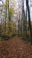 PB220210 (Robert A Stanford) Tags: walking north downs way