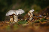 If you truly love nature you'll find beauty everywhere  -Van Gough- (Lorrainemorris) Tags: nature closeup autumn magical wild mushrooms