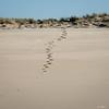 07112017_1968.jpg (aloha033) Tags: plage ocean paysage lasalie nature