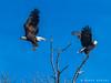 Later, Dude. (James Neeley) Tags: idaho baldeagle wildlife jamesneeley
