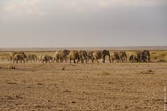 DSC_2324.jpg (ChiccoLoNigro) Tags: africa walking kenya family kajiadocounty amboselinationalpark elephant
