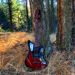 Wildlife Viewing (Pennan_Brae) Tags: guitarphotography musicphotography fenderguitar fenderguitars guitars electricguitars offsetguitar shortscale fender guitar electricguitar fenderjaguar