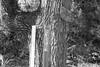 (daniel.hughley) Tags: backpacking coldwatercamp cran lospadresnationalforest manzanaschoolhouse thanksgiving