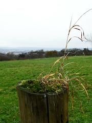 Mini-Landschaft (onnola) Tags: koblenz arzheim rheinlandpfalz deutschland germany rhinelandpalatinate herbst autumn zaunpfahl post fence zaun holz wood moos moss gras grass