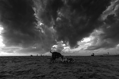 The stray dogs there and play while the clouds going to blast, paying no attention to that.... (Well-Bred Kannan (WBK Photography)) Tags: d750 travel india indian traveller monochrome mono wbkphotography wbk kannanmuthuraman kannan nikon nikond750 weekendwalk incredibleindia travelphotography wanderer tamronsp1530mmf28divcusd dogs chennai monsoon clouds rain rainydays beach