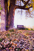 Quiet Thanksgiving (Clever Poet) Tags: peaceful thanksgiving colorado tree swing leaves fall colors crisp cool afternoon