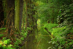 summer moods (JoannaRB2009) Tags: summer mood nature green forest canal kanał water reflections trees plants woods dolinabaryczy dolnyśląsk lowersilesia polska poland