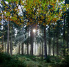 enchanted (DigitalLyte) Tags: trees forest woods light sun rays silhouettes shadows autumn fall pines beech enchanting quote johnmuir netherlands holland speuldersprielderbos bos