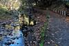 Nearly Back (LeftCoastKenny) Tags: alumrockpark hills trees grass ferns creek water stones trail retainingwall