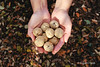 N O I X (Mayssem Hadjili) Tags: automne autumn nuts noix orange leaf handle hand humainhand floor day outdoor forest