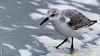 Langeoog -854734 (clickraa) Tags: langeoog strand brandung vögel