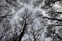 reach out (bkellerstrass) Tags: buche buchenwald ast äste chainedtothesky flickrfriday