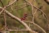 Scatti autunnali.. (paolotrapella) Tags: autunno foglie red rosso piante natura canoneos tamron