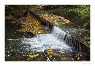 Weir in The Dene