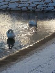 December (Hiljan Kuvaamo) Tags: