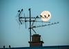 Couché de lune sur les toits (thierry16s) Tags: charente angouleme soyaux couché lune etourneau etourneaux ciel matin aube oiseau oiseaux contre jour