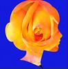 Who Is Rose? (Chic Bee) Tags: afterlight effects fx imagepostprocessing yellowandgold yellowroseoftexas tucson centraltucson arizona autumn flowerpot homedepot southwesternusa america americansouthwest