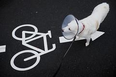 Bike Pathfinder (Monty May (OBSERVE)) Tags: hemer germany street dogs streetphotography humour