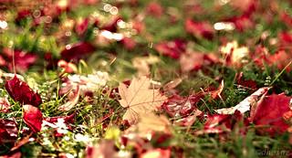 The first Autumn Leaf -  My Secret Garden