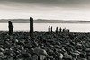 Sticks (Ian Livesey) Tags: ulverston channel cumbria england sticks pier beach rocks bw blackandwhite