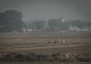Agra (Hooker771) Tags: india nepal hindi budda buddah spiritual smog fog nature beauty yoga agra delhi noida leela palace
