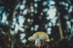 From beneath (A.Dissing) Tags: from beneath dope down perspective contrast looking a7ii a7 anders autumn beautiful blue black bokeh broken amazing art awesome adventure angle artistic angry mushroom scape scene schroom morssø denmark dissing dark danmark dirty day nature nothing nice yellow jylland green grass glass tree trees