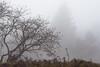 Strichmännchen / stick figure (Karsten Höhne) Tags: bäume felsen forst gipfel herbst hornbadmeinberg lippe lippischevelmerstot naturschutzgebiet nebel regen silberbachtal steine teuteburgerwald tour wald wanderweg