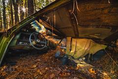 Broken Windshield View (Travis Rhoads) Tags: 2017 sonyilce7rm2a7rii voigtlanderultrawideheliar12mmf56asphericaliii ba72l bh55 reallyrightstuff rrspcl01 tvc33 abandonedcars nikcollectionbygoogle oldcars oldvehicles rust sunstar copyright2017 travisrhoadsphotography georgia oldcarcity
