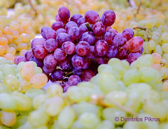 I heard it through the grapevine (DimitriosPi) Tags: grape background red food nature fresh dark green bunch cluster macro wine healthy health sweet fruit branch dessert harvest juice berry water ripe color summer natural nobody group agriculture organic diet autumn tasty nutrition closeup