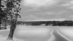 Frozen lake with a dangerous way of water in the middle. (evakongshavn) Tags: 7dwf bw blackwhite blacknwhite bnwphoto bnw blackandwhite winter winterwonderland winteriscoming frozenlake forest light new wald bois white tree trees whiteforest whitetrees lake lakes water waterscape landscapephotography landscape landschaft beautyinnature norsknatur natur nature naturbilder naturescape naturelover earthnaturelife naturephotography naturelovers fantasticnature naturaleza naturescenes naturphotography beautifulearth heavenonearth earthswonder earthy travelplanet tranquilglow tranquility serenity serene