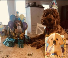 Jill's Brody is havig a blast at his 1st birthday party!