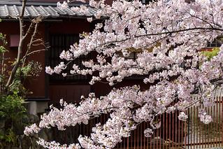 一之船入の春 / Ichinohunairi in Spring