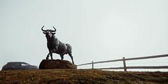 Bull (Alex Schubert) Tags: carinthia kärnten magdalensberg bull stier statue bronze fog nebel top skorianz restaurant winter fall herbst hochnebel sun intimidating majestic wallstreet alps alpine mountain mountains