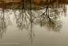 Still waters (Paul Henman) Tags: toronto 8thanniversaryparty 2017 torontophotowalks paulhenman evergreenbrickworks ontario topw2017rs paulhenmanphotographyca httppaulhenmanphotographyca brickworks topw