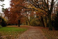 (Zeituhr) Tags: zeituhr november fall herbst fog