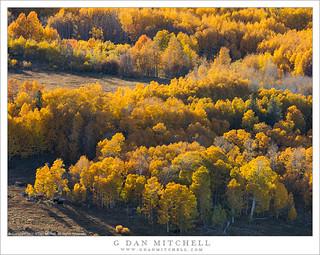 Autumn Aspens and Meadows