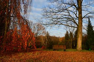 November - Silesian Park