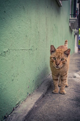 Here Kitty Kitty (markdnormann) Tags: panama cat balboa ship descendant city bay