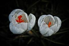 Secret Worlds (MrBlueSky*) Tags: flower plant petal garden horticulture nature outdoor colour royalbotanicgardens kewgardens london aficionados pentax pentaxart pentaxlife pentaxawards pentaxflickraward ngc npc