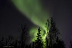 Forest on fire (danielusescanon) Tags: auroraborealis northernlights night stars