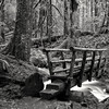 Wooden Bridge, Salmon Huckleberry Wilderness (Scott Withers Photography) Tags: salmonriver salmonhuckleberrywilderness mthood oregon sonya7rii zeissloxia35mmf2
