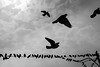 those who can / those who do (Özgür Gürgey) Tags: 2016 50mm bw d750 nikon birds clouds flying pigeons silhouettes sky istanbul sun taksim wire