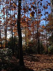 20 (emmess2) Tags: campiglia cinqueterre spezia autumn fall leaves