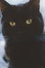 yellow eyes. (Nicole Favero) Tags: verde black cat kitty love animals cute cool awesome forever followme mine nikon nikond5000 camera reflex cuteness yellow eyes portrait nature darkness crazycatcafè milan place lightroom
