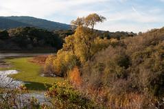 Jasper Ridge Biological Preserve (_quintin_) Tags: tree nature autumn fall jasperridge california