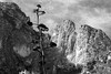 Texas:  McKittrick Canyon (jswensen2012) Tags: cliffs texas centuryplant agave guadalupemountainsnationalpark mckittrickcanyon monochrome chihuahuandesert