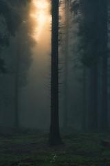 Misty morning (kisko-Sonia) Tags: niebla árbol bosque luz mañana nikon misterio fog light tamron forest shadows trees sombras mist neblina d750